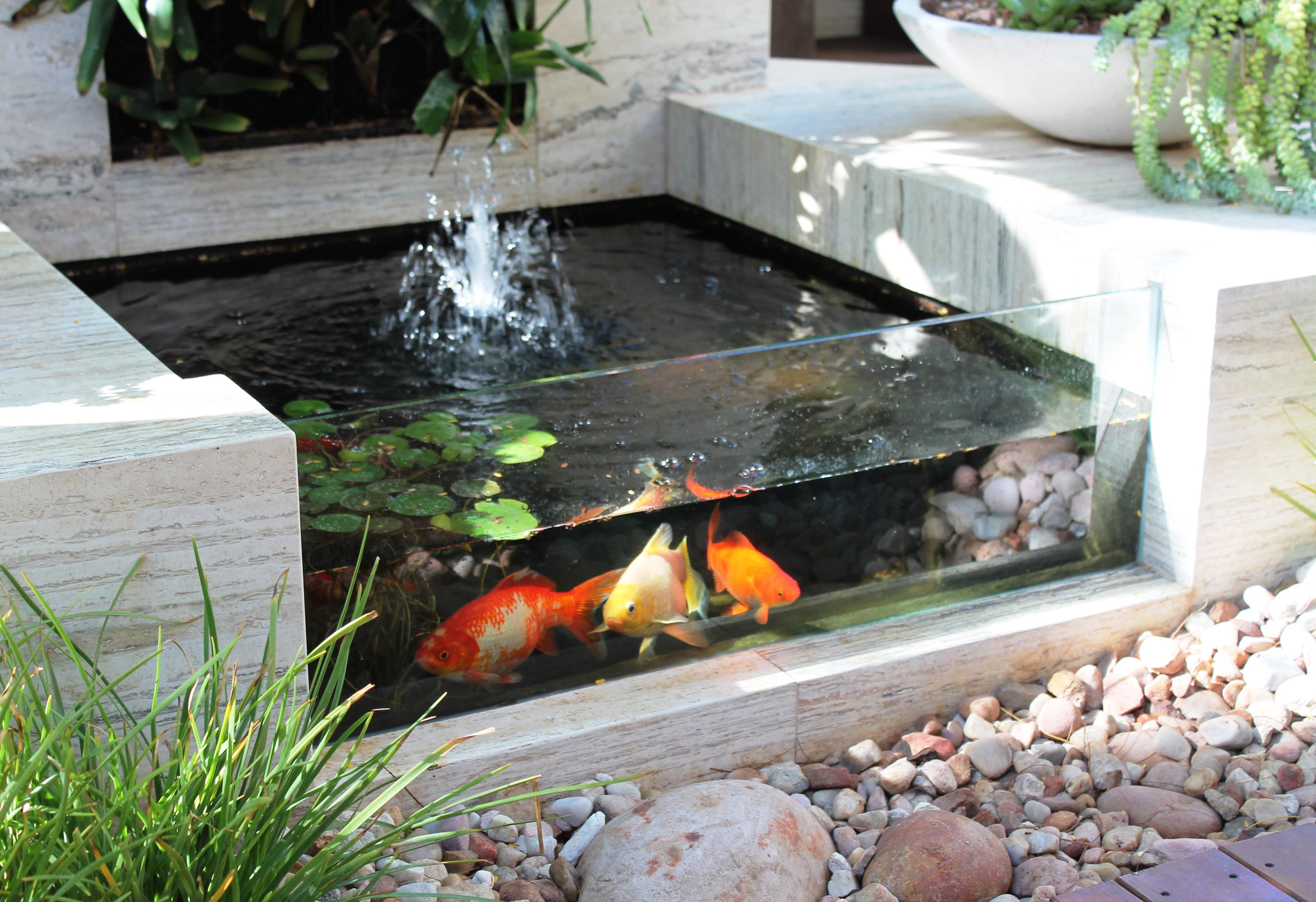 5 Hal Penting Membuat Kolam Ikan Minimalis Depan Rumah